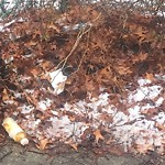Litter at Intersection Of Seminole St & Wood Ave, Mattapan