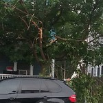 Tree Pruning at 89 Hancock St, Dorchester