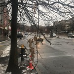 Tree Pruning at Intersection Of Griggs St & Commonwealth Ave, Allston
