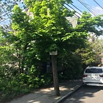 Tree Pruning at 10 Carruth St, 1, Dorchester