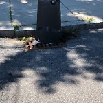 Litter at Intersection Of Etna St & Cushman Rd, Brighton