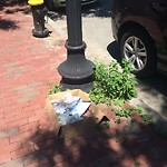 Litter at Intersection Of W Springfield St & Newland St, Roxbury