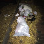 Residential Trash out Illegally at 68 70 Phillips St