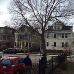 Tree Pruning at 29 Morrill St, Dorchester