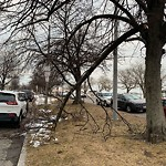 Tree Pruning at Intersection Of Columbia Rd & M St, South Boston