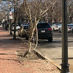 Tree Pruning at Intersection Of W Brookline St & Shawmut Ave, Roxbury