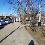 Tree Pruning at Intersection Of Elmwood St & Malcolm X Blvd, Mission Hill