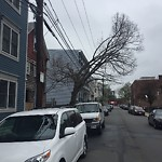 Tree Pruning at Intersection Of Lark St & W Ninth St, South Boston