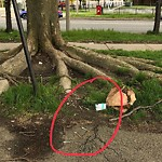 Needle Clean-up at Intersection Of Melnea Cass Blvd & Albany St, Roxbury