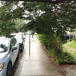 Tree Pruning at 97 Green St, Jamaica Plain