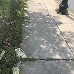 Litter at 1421 River St, Boston 02136, United States
