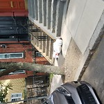 Residential Trash out Illegally at 23 Linwood St Roxbury