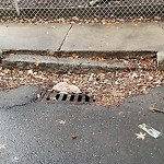 Catchbasin at Intersection Of Appian Way & Brentwood St, Allston