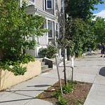 New Tree Requests at 400 Centre St, 1, Jamaica Plain