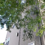 Tree Pruning at 83 Burrell St, 1, Roxbury