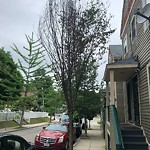 New Tree Requests at 105 Alban St, Dorchester