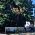 New Tree Requests at Intersection Of Wedgewood Rd & Weld St, Roslindale