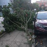 Dead Tree Removal at 252 254 S Huntington Ave, 1, Jamaica Plain