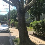 Dead Tree Removal at 41 Nikisch Ave, Roslindale