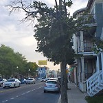 Tree Pruning at Intersection Of Elton St & Dorchester Ave, Dorchester