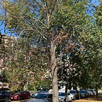 Tree Pruning at 125 Park Dr