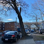 Dead Tree Removal at 8 Granfield Ave, Roslindale
