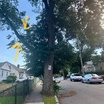 Tree Pruning at 250 Hebron St, Mattapan
